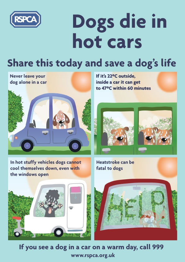 RSPCA Infographic for dogs overheating in cars