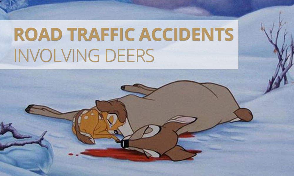 What to do if you hit a deer while driving